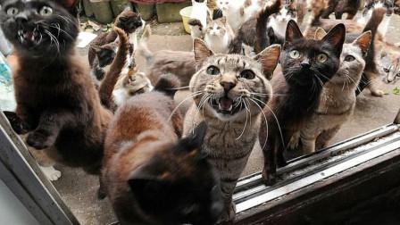 澳洲最凶残的动物,每年上亿只动物遭殃,政府下血本消灭!