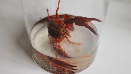 小龙虾真的洗干净了吗?将它放入高浓度酒精,30分钟后不忍直视