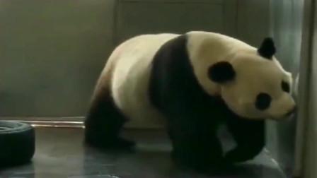熊猫:金虎一生气奶妈就哄,别人说一句都不行,连浪费都是对的了