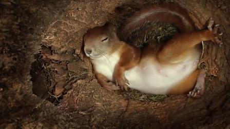 松鼠藏在树洞中一天都在干啥?监控记录了一切,萌得人心都要化了