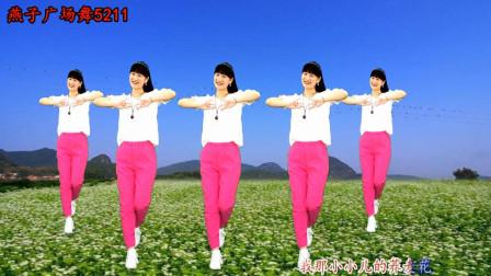 燕子广场舞5211《荞麦花》 零基础民歌健身舞教学