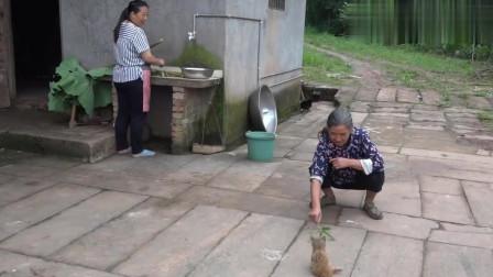 农村幺妈:幺妈在家用野菜做美食,六妈来开玩笑,两妯娌挺能逗乐