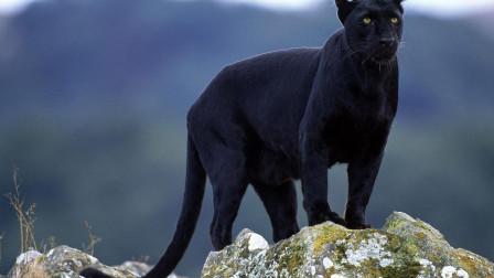 地球上最凶猛的动物,比老虎都厉害,到底是什么?