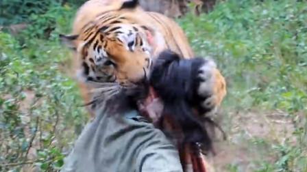 男子曾救下一只小老虎,8年后再相遇,不料老虎直接扑倒了他!