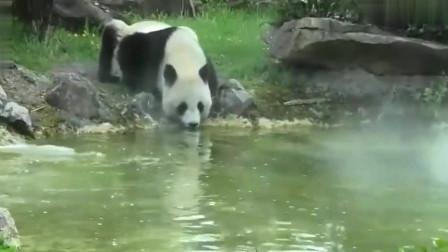 熊猫:熊猫欢欢和圆梦在法国的悠闲熊生,网友:比人过得还舒服
