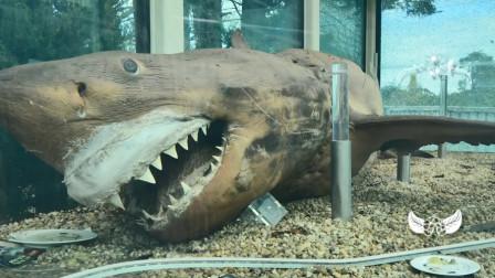 国外废弃的动物园里,走进地下室,发现一条长达4米的大白鲨