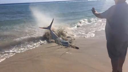 男子在海边发现一条大鱼,走近一看有些懵,镜头记录全程