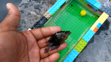 小哥用乐高做的鱼缸,美观结实,钓了一条鱼养,一点水都不漏