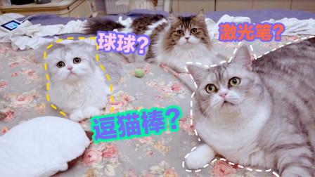 几块钱买来的逗猫棒就能让猫咪们玩到疯狂,神同步摇头的场面好搞笑