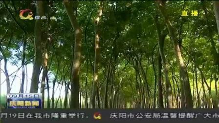 """庆阳新闻:张乐:从外企""""白领""""到乡村致富带头人"""