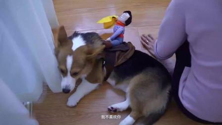 狗子戴着狗语翻译机,和主人的对话超搞笑
