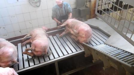 杀猪不见血,就连猪惨叫声都没有,这种杀猪场面头回见