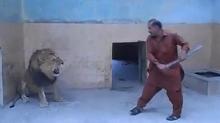 雄狮不听话,结果被饲养员收拾了一顿,镜头拍下全过程