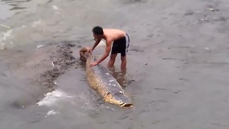 农村暴雨后冲来一条大鱼,男子靠近后发现不对劲,镜头拍下全过程