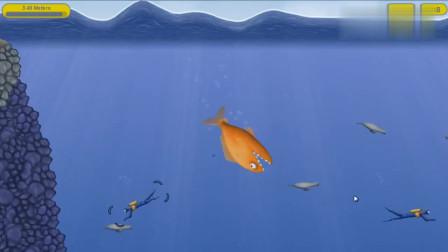 「小熙解說」美味的金魚 一條金魚被放生后劇變成外來物種入侵啦