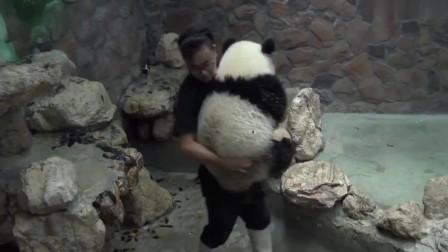 大熊猫:奶爸!抱我!