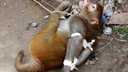 残忍动物园到底有多残忍?看完你就知道了,实在太痛心