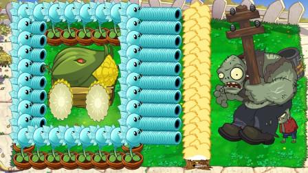 用豌豆射手保护玉米加农炮,伽刚特尔:这让我如何是好?