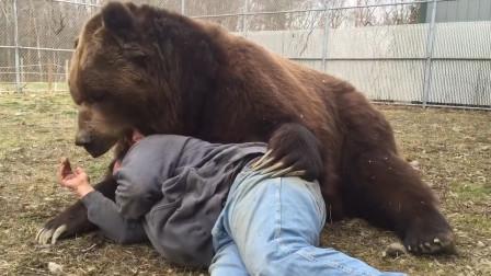 男子躺在棕熊怀里休息,棕熊突然朝他的脖子咬去,镜头记录全过程