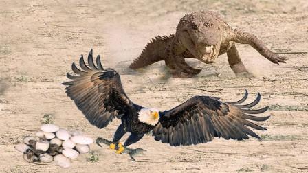 """老鹰大战鳄鱼,不料""""水中霸主""""被算计,镜头拍下老鹰诡诈一面!"""