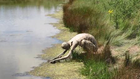 """女子在河边散步,发现一只""""""""怪物""""在喝水,镜头记录全过程"""