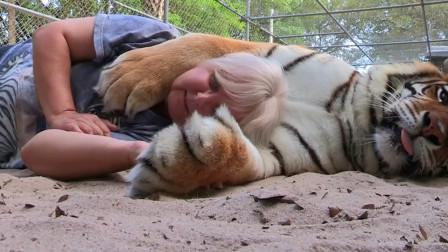 老虎睡觉时抱着饲养员,睡醒之后立马翻脸,镜头拍下全过程