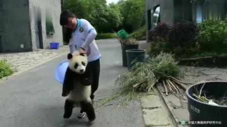 熊猫:我不听奶妈的话,结果被拎住了命运的后颈皮