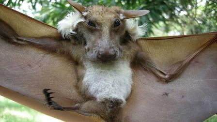 世界上最奇葩蝙蝠,长着毛茸茸狗头,网友:确定不是PS?