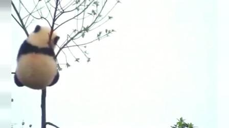 熊猫: 这自挂东南枝的操作,还有点优雅?