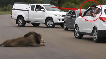 熊孩子作死将身子探出车外,给狮子拍照,镜头记录惊险一刻