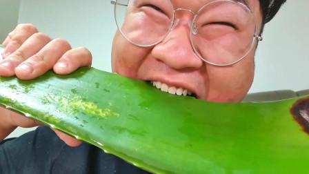 韩国大胃王小胖,吃一整块生芦荟,一口要下去太过瘾了