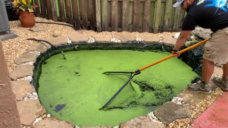 一池绿水里有什么东西?老外认真打捞,网友:它们是怎么活下来的