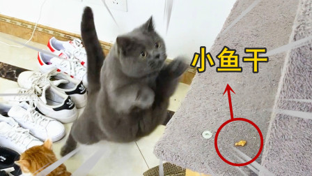 主人给猫咪设了障碍跑道,猫一跃而起,结果尴尬了