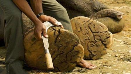 给大象修脚就像在削大发二分彩—大发彩神8快3下载,游客看着很疼,大象却一脸享受!