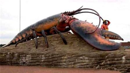 """这只龙虾养在饭店活了134岁,国家颁发""""免死金牌""""!吃货只能干瞪眼"""
