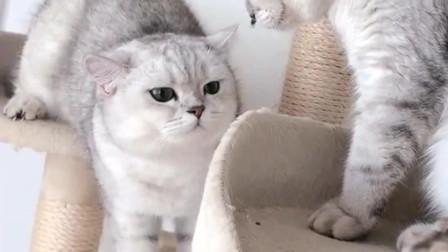 这只猫咪把仓鼠当宠物养,连自己的孩子都不能碰