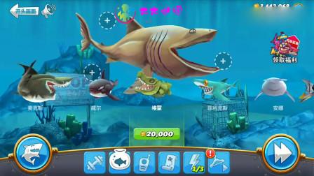 饥饿鲨世界:嘴巴最大的姥鲨,能不能吃掉超大型水母呢?
