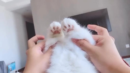 不是我吹,就猫咪两个可爱爪爪,都够你吸很久