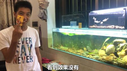 鱼缸长满绿藻,刮藻刀太贵不舍得买!只能用一张银行卡,你有比我更好方法吗?