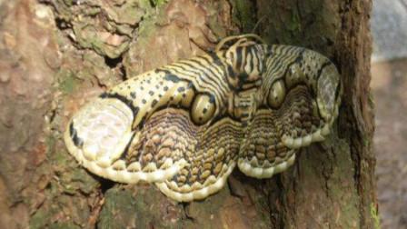 """男子在野外发现一条""""蛇"""",凑近距离一看,才发现没那么简单"""