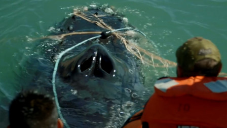 一头庞然大物被困海中,浑身缠满渔网,多亏人们出手相助