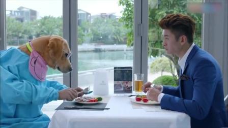 主人带狗一起在餐厅吃西餐,谁料下秒一掀开衣服,竟出来个大美女
