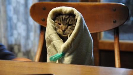 假如猫从世界上消失了,佐藤健和宫崎葵日本奇幻电影相关的图片