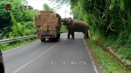 """你见过大象拦路""""打劫""""吗?你开着车的时候,前面突然来只老虎你会怎么办?"""