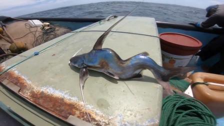 幼鱼遭受重创,身体扭曲变形,让人心疼