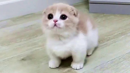 主人拿走猫咪的玩具,小猫崽满脸怒气看着她:快把玩具还给我!