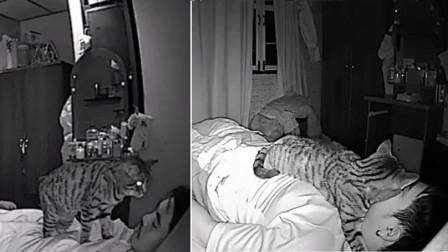 主人经常和猫一起睡,当查看监控时,发现了猫诡异的一幕