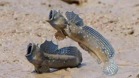 """世界""""最悲催""""的鱼,努力3亿年终于上岸,还未学会行走就被中国吃货吃了"""
