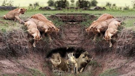 """疣猪藏在洞中躲避抓捕,本以为安全了,谁料来的是""""拆迁大队"""",镜头拍下全过程!"""