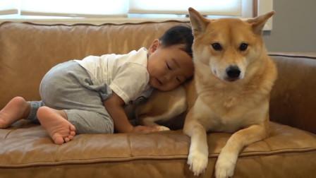 小宝宝趁爸妈不在,给狗狗疯狂加餐,两个小伙伴感情也太好了
